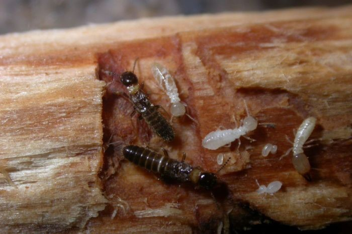 The Dirty World Of Termites