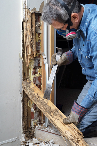 termites-in-your-home